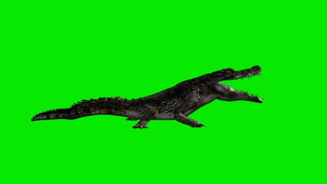 Eating Crocodile Green Screen (Loopable) video