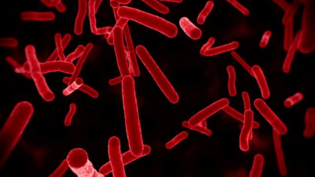 Ecoli Bacteria Red video