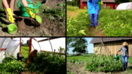 Ecologic gardening in rural farm. Video clips collage. video