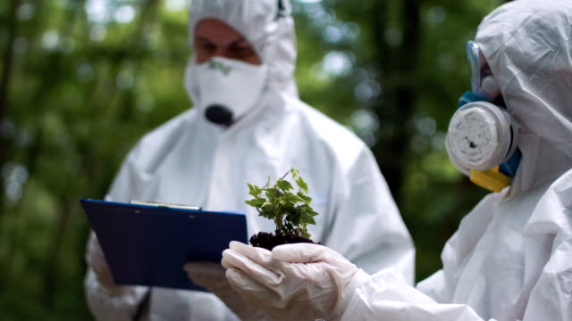 Ecologist do the analysis of a plant video