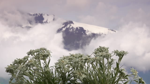 Edelweiss With Alps video