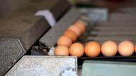 Egg grading machine. video