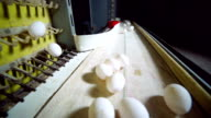Egg production line in action on the poultry farm video