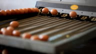 Egg production line video
