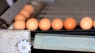 Egg production line video