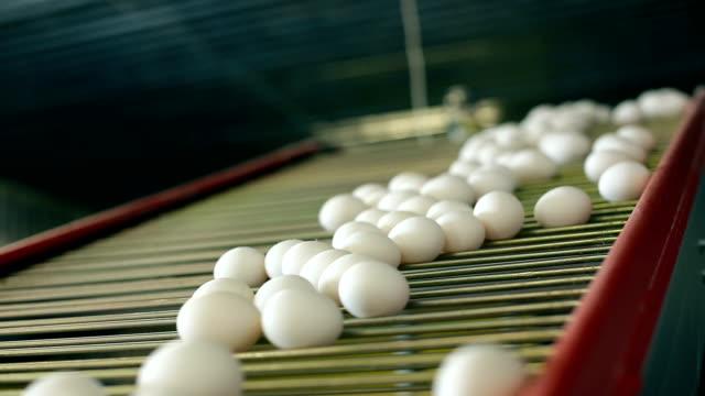 Eggs on the conveyor video