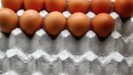 eggs video