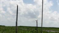 egrets hold on concrete pillar in lotus marsh in sunny da video