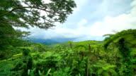 El Yunque National Forest, Puerto Rico video
