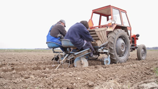 Elderly farm workers sowing the potato video