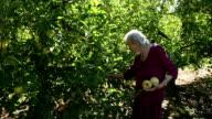 Elderly Lady Picking Apples video