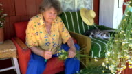 elderly woman reap camomile flowers with knife in country video