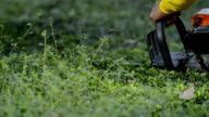 electric hedge trimmer video