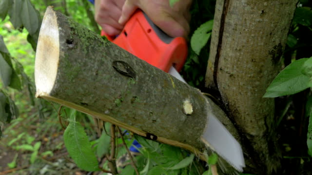 Electric power saw cutting off tree brunch video