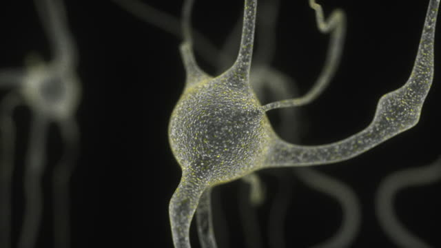 Electron Microscope View Of Neuron Cell video
