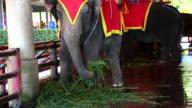Elephant Eating video