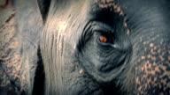 Elephant Head Moving Around With Big Sad Eyes video