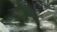 Elephant standing in the shallow rapids of a river. Elephant pours water video