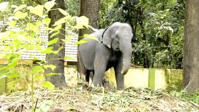 Elephant video