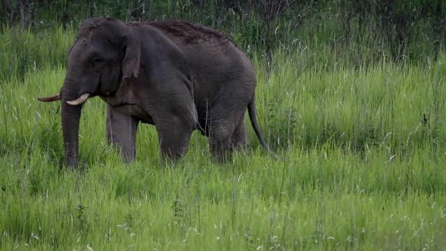 Elephant. video