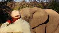 Elephant walking very close to a safari vehicle video