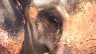 Elephant with eye infection video