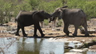 Elephants at waterhole in Slow Motion video