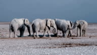 Elephants at waterhole video