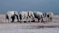 Elephants at waterhole video