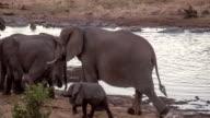LS PAN Elephants By The Waterhole video