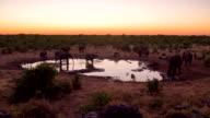 WS DS Elephants By The Waterhole video