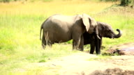 Elephants drinking and playing with water-10/13 video