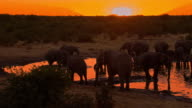 LS Elephants Drinking Water From Waterhole at sunset video
