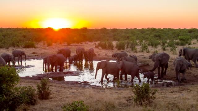 LS DS Elephants Drinking Water From Waterhole video