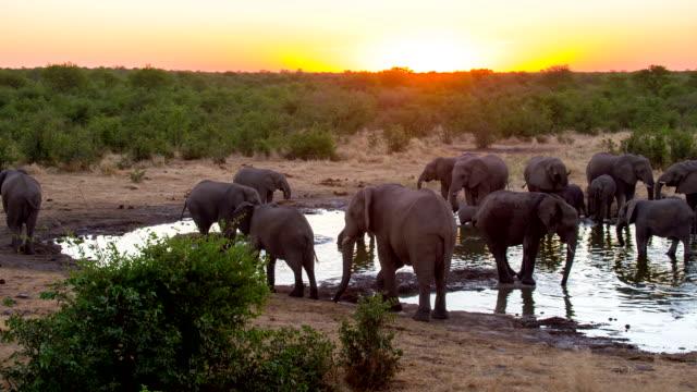 LS Elephants Drinking Water From Waterhole video