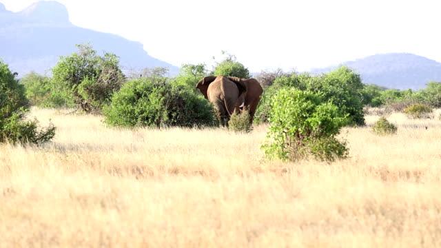 Elephants fighting very hardly video