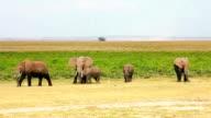 Elephants in Amboseli Park, Kenya video