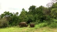 Elephants in Minneriya Wildlife Reserve, Sri Lanka video