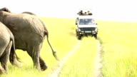 Elephants in Safari at Wild with tourists video