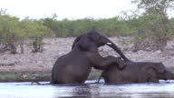 Elephants playing in the water, Slow Motion video