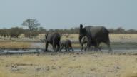 elephants running video
