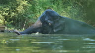 Elephants take a bath video