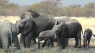 elephants video