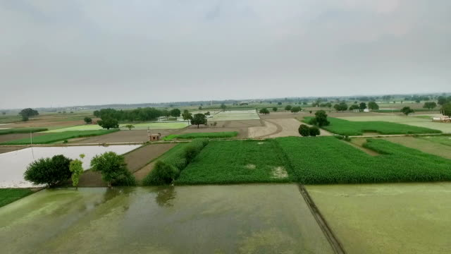 Elevated View Of Agriculture video