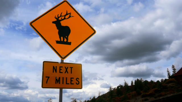 Elk Caution Sign on Mountain Road video