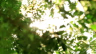 emotional sun watching through trees and leaves video
