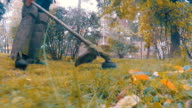Employee with manual petrol lawnmower is mows the lawn video
