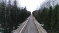 Empty road between tall trees video