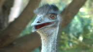emu video
