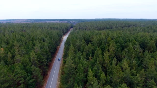 Endless road in a forest. Aerial photography video